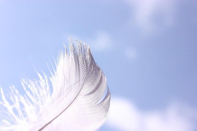 s-青空と羽