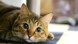 s-cat