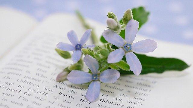 s-洋書と花