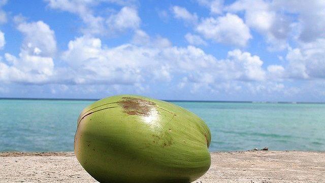 s-coconut-1179414_640