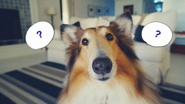 s-dog-2